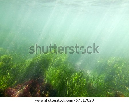 Murky ocean water and sea grass at La Jolla Cove in San Diego County, California.