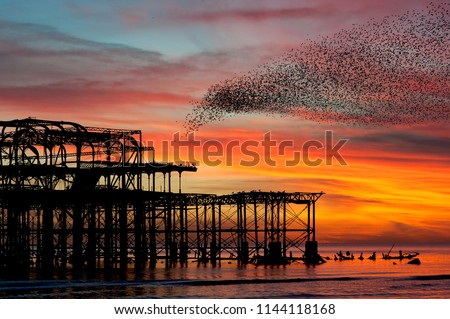 Murmuration over the ruins of Brighton's West Pier on the south coast of England. Aerial acrobatics of a flock of starlings over the pier at sunset.