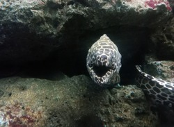 Murray eels hiding in the bottom of the sea.