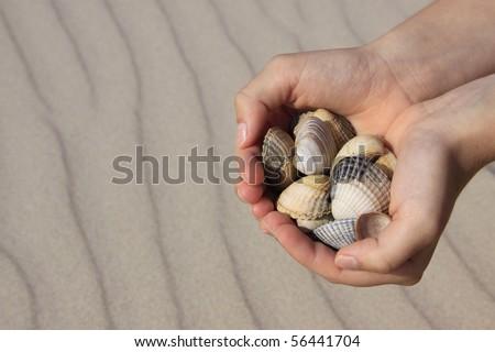 Muscheln in Händen mit Meeressand