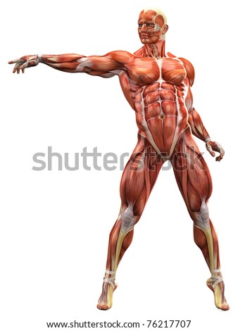 muscle man free style