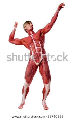 muscle man front view. isolated on white