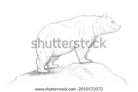 Muscular grizzly bear.Pencil  sketch of a bear.A grizzly bear stands on a hill.Strong grizzly bear.Drawing of a grizzly.Animal sketch.  Stock fotó ©