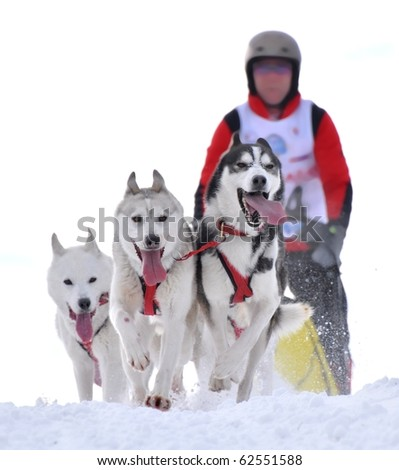 musher hiding behind sleigh at sled dog race on snow in winter