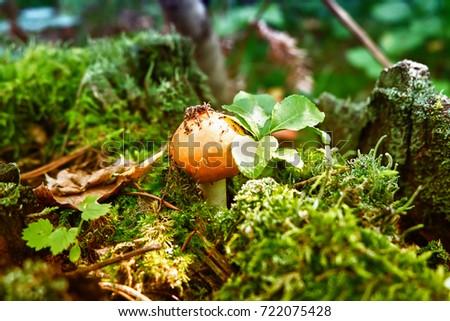 Mushroom #722075428