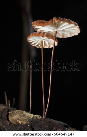 mushroom and macro fungi in Thailand