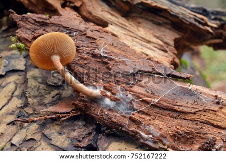 mushroom and mycelium on tree bark
