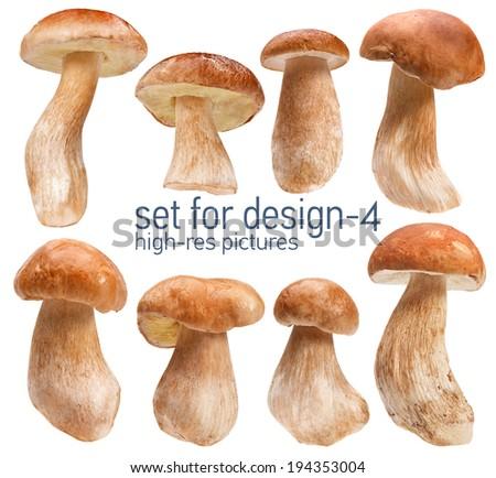 Mushroom Boletus - gustable edulis isolated on white background with set for design  Foto stock ©