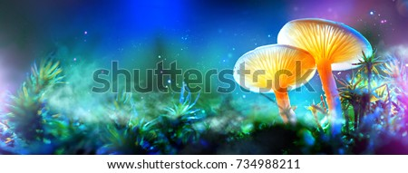 Mushroom. Fantasy Glowing Mushrooms in mystery dark forest close-up. Beautiful macro shot of magic mushroom, fungus. Border art design. Magic scene, light in night forest. Wide banner. #734988211
