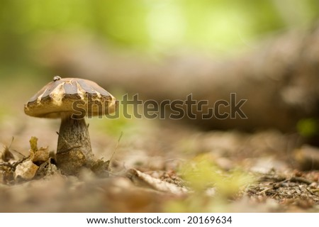 mushroom growing in the forest #20169634