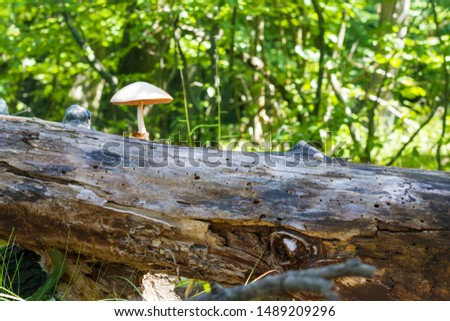 Mushroom grows from log in forest. Natural organic toxic plants growing in wood #1489209296