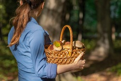 Mushroom hunting time. Young woman holding rural farm-style basket full of boletus mushrooms autumn harvest. Edible healthy fungus picking season outdoor outing activity in the forest on a sunny day.
