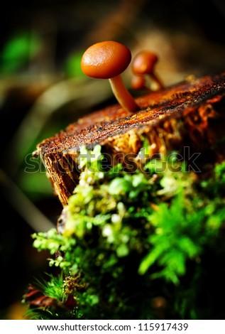 mushroom in the forest closeup shot
