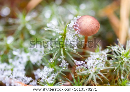 Mushroom in the forest. Mystical forest