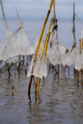 Mushroom like ice caps over straws of reed in coastal waters. Half transparent dome hat over thin tube, Fragile natural decorations created by temperature fallen below freezing.