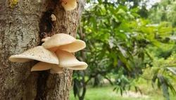 Mushroom on the tree