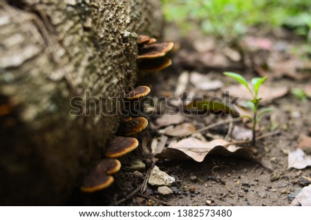 Mushroom on the tree, Picture of a wildlife forest mushroom in the woods in fall, Spring time, Picture in deep forest, Mushroom Background and texture