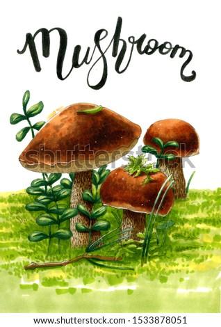 Mushroom on white background. Watercolor and Marker art. Food illustration