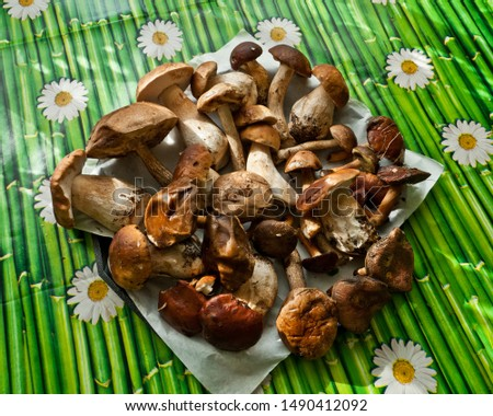 Mushroom picking. Different edible mushrooms (boletus edulis bull, borowik szlachetny, prawy, prawdziwek, leccinum scabrum, kozak, kozlarz babka, imleria badia, podgrzybek brunatny) on the table. Zdjęcia stock ©