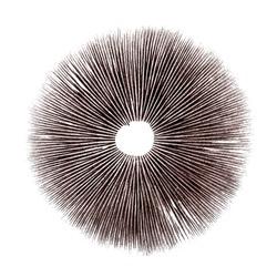 Mushroom spore print on white background. Psilocybe cubensis psychedelic magic mushroom