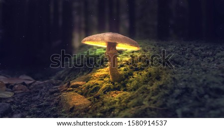 Mushroom Wallpaper ,Fantasy Wallpaper, 4K, Mushroom Light,  Fantasy Mushroom, Jungle, Forest Mushroom, Jungle Background, fantasy. Сток-фото ©