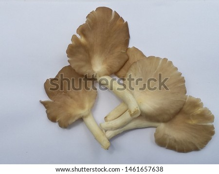 Mushroom white and brown. Mushroom protect heal cancer and Blood vessel disease on the white blackground. #1461657638