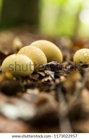 Mushrooms Bundled Together #1173022957