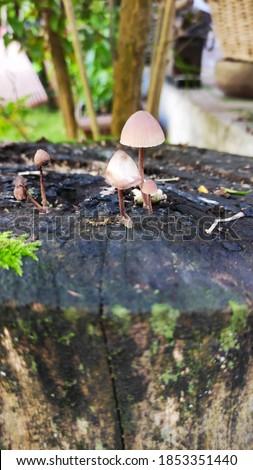 Mushrooms close up in garden Stok fotoğraf ©