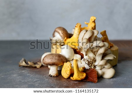 Mushrooms different mushrooms, chanterelles, oyster mushrooms on a gray background.