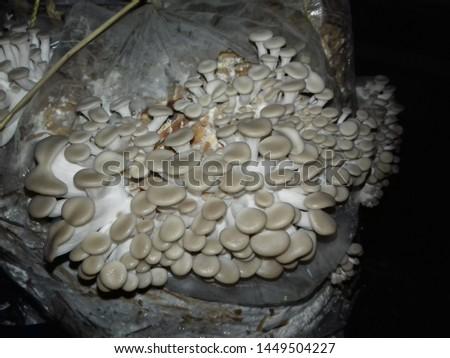 Mushrooms Farming and capsicum farming