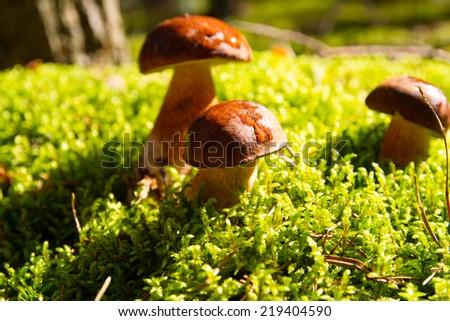 Mushrooms forest #219404590