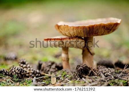 Mushrooms growing in the Forest in Autumn