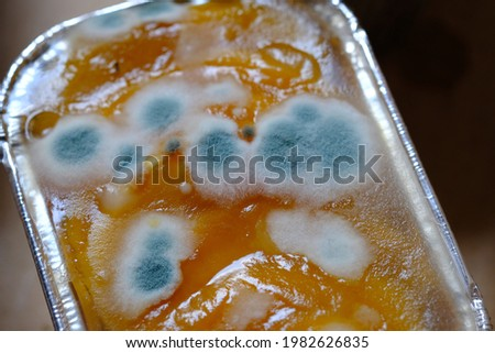 mushrooms growing on the fruit pudding. dangerous and poisonous mushrooms. if eaten can cause food poisoning. mold poisonous fungi.