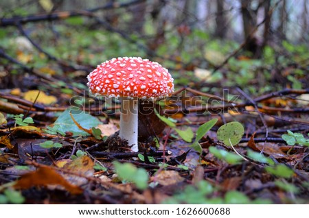 mushrooms in a clearing in autumn