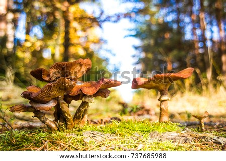 Mushrooms in autumn forest in Czech Republic #737685988