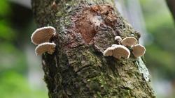 mushrooms in the tree