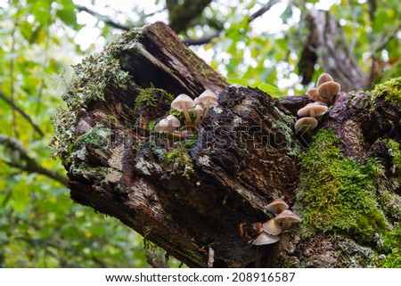 Mushrooms, moss and lichen on tree trunk in autumn