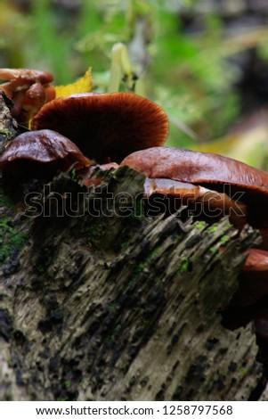 Mushrooms on a fallen Birch log.  #1258797568