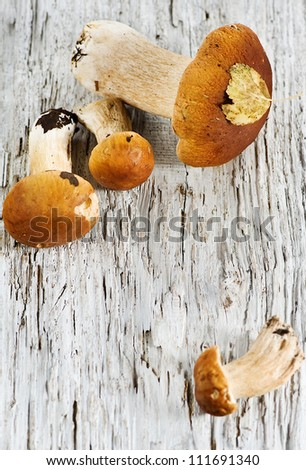 Mushrooms on the old wood background