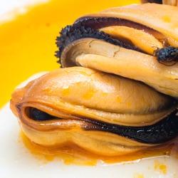 mussel close up
