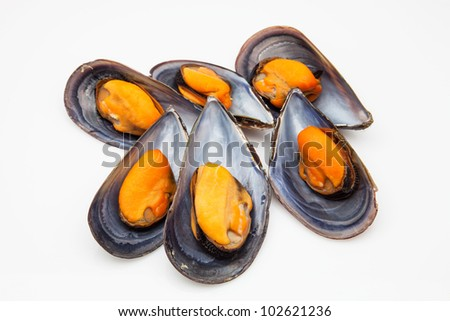 mussels steamed and ready to eat