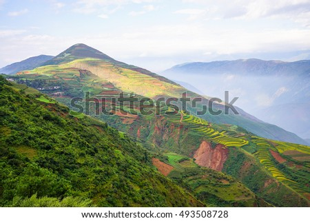 Mustard and flower field in winter at countryside of DongChuan red land, one of the landmarks in Kunming, yunnan province China. (With fog, mist, haze effect at background and blur foreground.) - Shutterstock ID 493508728