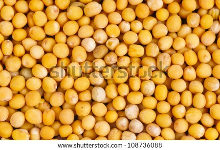 Mustard seeds  as food background