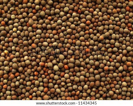 Mustard seeds for culinary use