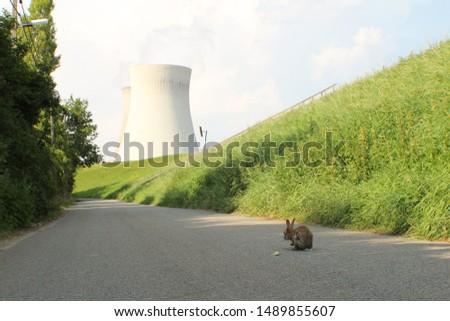Mutant rabbit near nuclear power plant