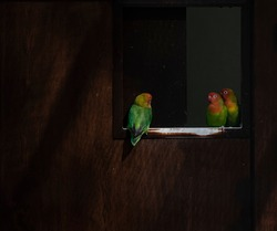Mutually observing parrots through the entrance to the bird pavilion in the ZOO.