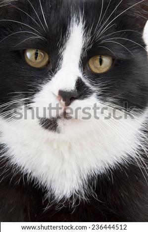 muzzle a cat on a white background closeup
