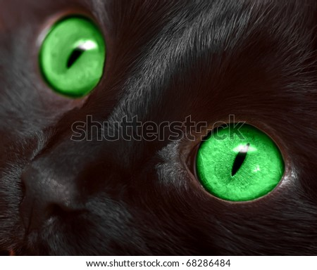 Muzzle closeup of black cat with green eyes