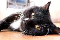 muzzle of black cat lying on the floor