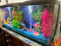 My Awesome Saltwater Fish Tank
